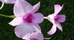 Alteração da Lei de Orquídeas (Nº 14.065/05)ESSA - Estratégia Socioambiental