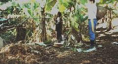 Manejo Sustentável da Mata Atlântica - Sistemas AgroflorestaisESSA - Estratégia Socioambiental