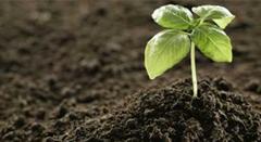 Projeto Adubo Orgânico - Resíduo ZeroESSA - Estratégia Socioambiental