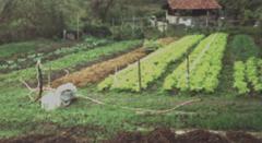 Projeto Agricultura SustentávelESSA - Estratégia Socioambiental