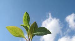 Termo de Referência Nacional em SustentabilidadeESSA - Estratégia Socioambiental